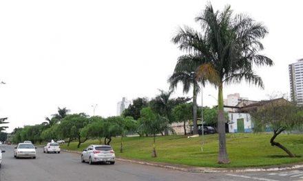 Mais de 70 árvores serão derrubadas para construção de terminal provisório em Goiânia, denuncia vereador