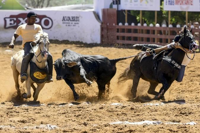 Caiado sanciona lei que regulamenta vaquejada como atividade cultural em Goiás