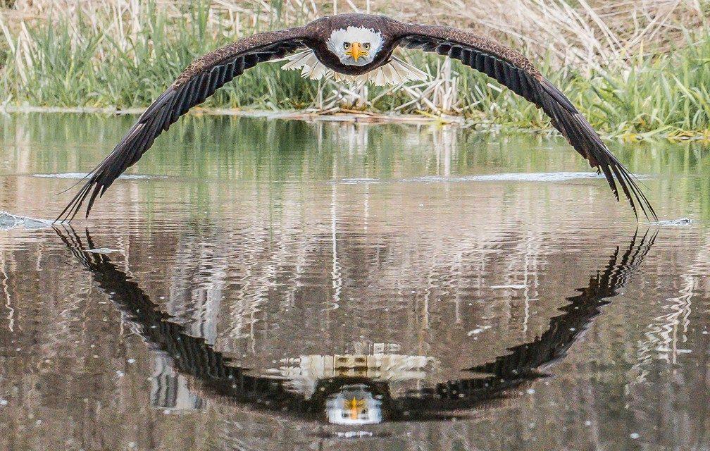 A incrível foto da águia que viralizou e surpreendeu fotógrafo amador: 'Senti a brisa das asas'