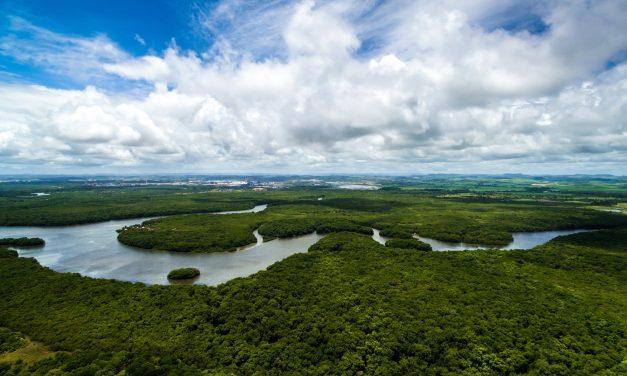 Brasil é o país que mais altera leis de proteção à Amazônia, diz ONG