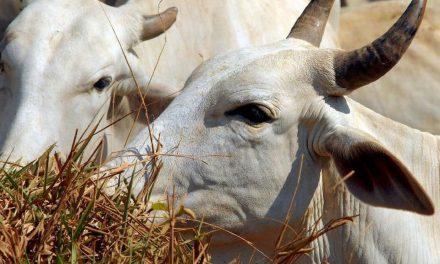 Ministério suspende exportação de carne bovina para a China