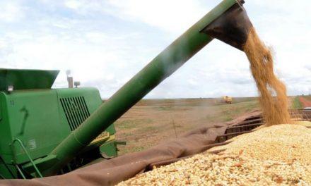 IBGE eleva estimativa da safra de grãos para 2019