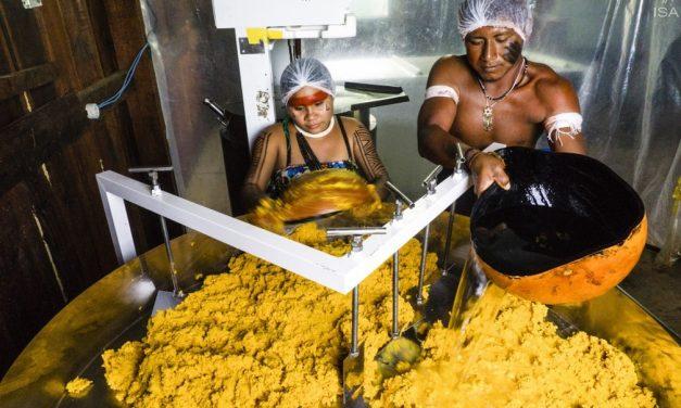Índios brasileiros ganham prêmio da ONU por produção de óleo de pequi em aldeia