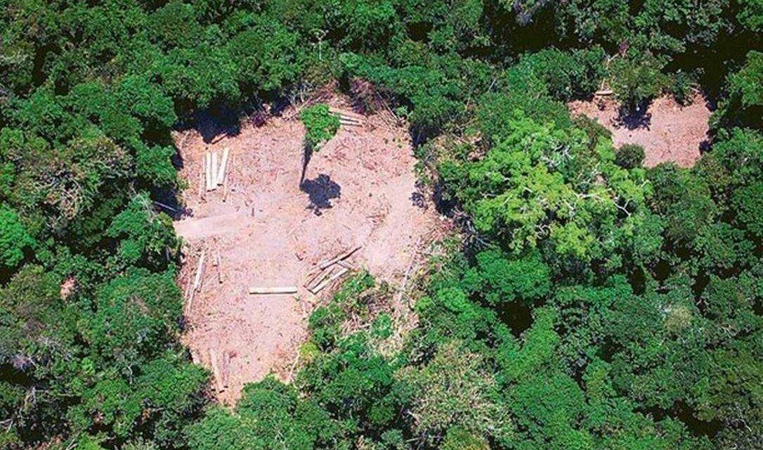 Noruega paralisa repasses para a proteção da Amazônia
