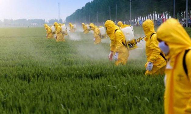 Governo autoriza mais 63 agrotóxicos