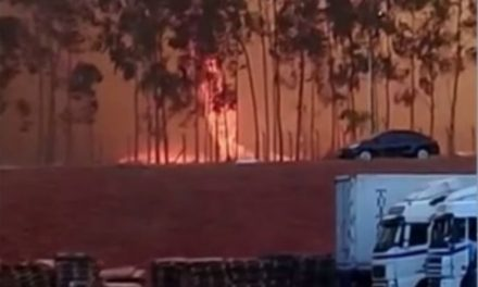 Queimadas em Goiás evacuam usinas de álcool e escola, fecham estradas e matam animais