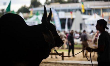 75ª Exposição Agropecuária de Goiás é adiada por tempo indeterminado