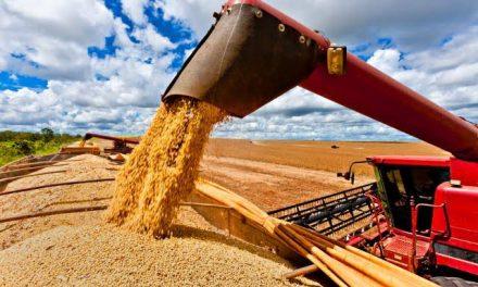 IBGE estima alta de 1,5% na safra de grãos deste ano