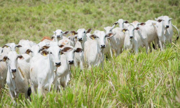 Goiás tem alta nas exportações de carne bovina e recorde da produção de soja