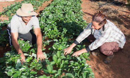 Governo anuncia benefícios para a agricultura familiar