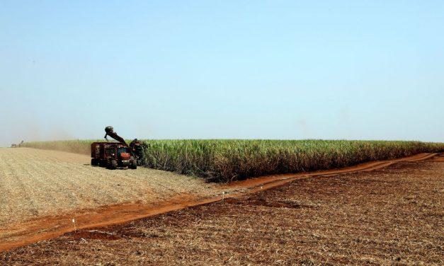Estimativa de junho prevê safra recorde de 247,4 milhões de toneladas