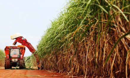 Produção de açúcar em Goiás deve crescer 53,6% na safra 2020/2021