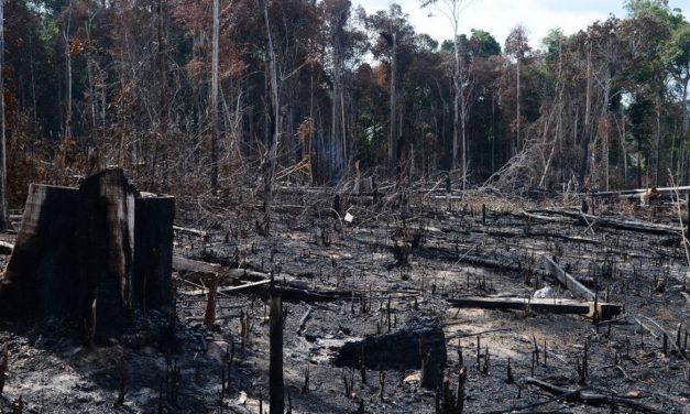 Economia concorda com ajuste de metas para o desmatamento
