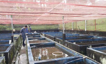 Programa da Emater beneficia piscicultores de Minaçu
