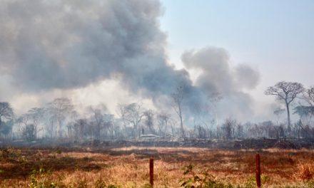 Boletim aponta 1.351 focos de queimadas em uma semana