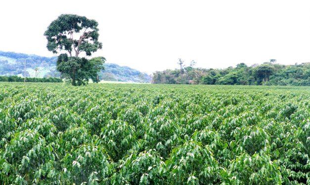 Polo cafeeiro será instalado em Santa Rita do Araguaia