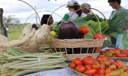 Governo de Goiás recebe propostas do Programa de Aquisição de Alimentos