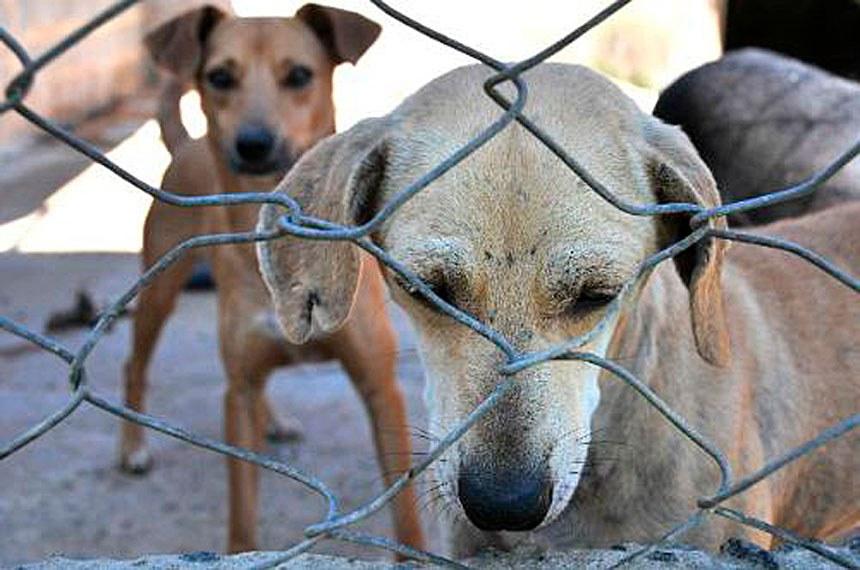 Aumento da pena para quem maltratar cães e gatos vai à sanção