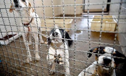 Senado pode votar hoje pena de prisão para quem maltratar animais