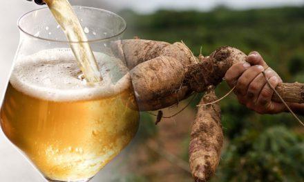 Projeto da cerveja de mandioca deve contemplar mais de mil produtores goianos em 2021