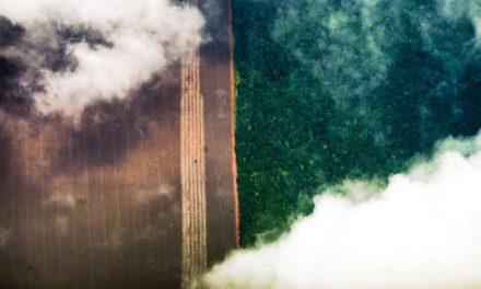 AGU cobra na Justiça R$ 893 milhões de desmatadores da Amazônia