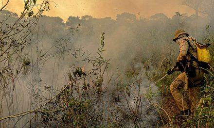 Incêndios no Pantanal: comissão do Senado visita Mato Grosso