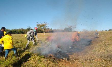 Goiás registrou crescimento de focos de incêndio em agosto; número está 50% menor em setembro