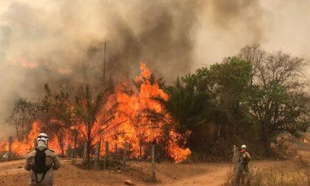 Goiás registra 964 focos de queimadas em agosto