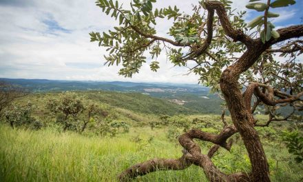 Nova plataforma identifica desmatamentos no Cerrado