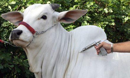 Vacinação contra raiva é obrigatória em 121 municípios considerados de alto risco