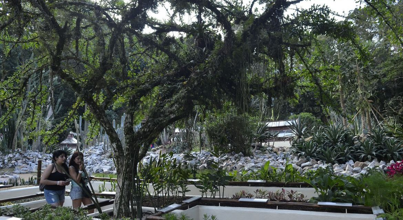 Jardim Botânico do Rio inaugura serviço de visita guiada em carrinho