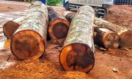 Ação da PF combate extração de madeira em terras indígenas
