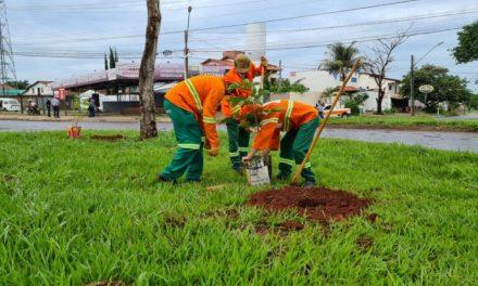 Comurg faz plantio de árvores em substituição aos jamelões