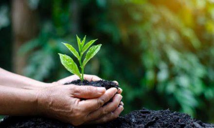 Prorrogação do Regime Extraordinário de Licenciamento Ambiental é sancionada