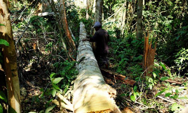 Alerta de desmatamento na Amazônia Legal é o maior para o mês de abril desde 2016