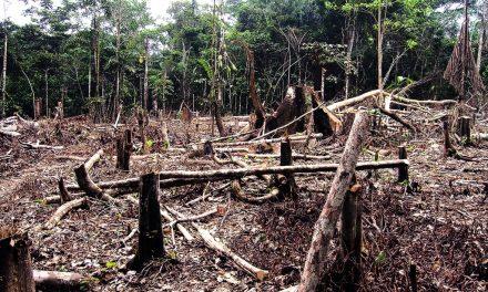 Supermercados britânicos e europeus ameaçam boicote ao Brasil por desmatamento
