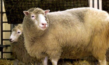Primeiro mamífero clonado, ovelha Dolly completaria hoje 25 anos