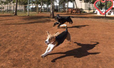 Sancionado projeto para construção de espaços de convivência para pets em Aparecida