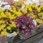 Flores tradicionais para o Dia de Finados apresentam variação de até 92,31%